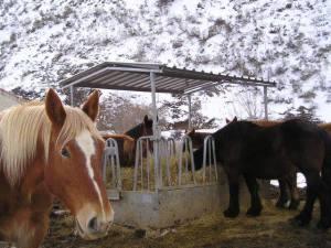 comederos para caballos y bebederos | material equino